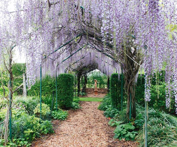 A walkway shaded by strands of flowering wisteria is a highlight of the garden.