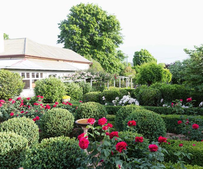 """'L.D. Braithwaite' roses blaze a stark red in front of the Wilshires' 1910 house, surrounded by Dutch box balls and [English box hedges](https://www.homestolove.com.au/front-garden-hedge-plants-privacy-6212 target=""""_blank""""). The arbour is covered by 'Albertine' roses."""