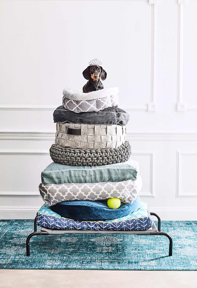 "Here's our round up of the best [pet homes and beds](https://www.homestolove.com.au/home-design-for-pets-14636|target=""_blank"") for your furry friend."