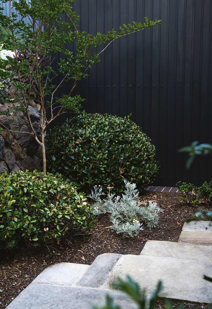 """Much of the garden's allure comes from the established plants and trees. Some of these were blocking views, so Michael thinned and reshaped them to reveal the ocean. While this initially shocked Jaimie, he soon saw the benefits. As he says, """"I love the texture of the garden; I'm a big fan of shaping. The organic nature of the backyard area has great shapes and it's only going to get better in years to come.""""<br><br>**Pathway** *Rhaphiolepis indica* 'Oriental Pearl' and *Senecio viravira* with silver leaves are planted beside recycled sandstone paving from the original garden. The fence is stained in 'Palm Beach Black' by Porter's Paints."""