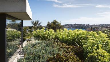 This sunny coastal garden is filled with low maintenance plants
