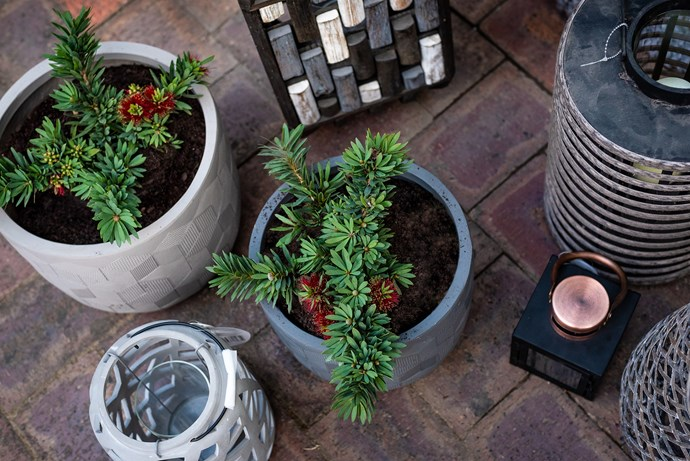 "Assorted Northcote Pottery pots, available from [Bunnings](https://www.bunnings.com.au/search/products?q=willow&redirectFrom=Any&facets=BrandName%3DNorthcote%20Pottery|target=""_blank""