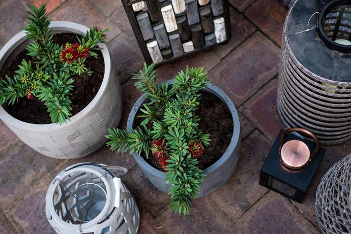 """Assorted Northcote Pottery pots, available from [Bunnings](https://www.bunnings.com.au/search/products?q=willow&redirectFrom=Any&facets=BrandName%3DNorthcote%20Pottery