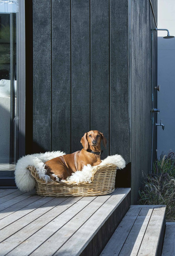 **Exterior** Malvina and Malcolm wanted their decks to have a weathered look, so they chose merbau wood, a naturally durable timber. It has been left untreated, to 'silver off' over time, and they maintain it with occasional oiling. Their dog Duchess approves.<br><br>**Timeline**<br>**July 2015** Malvina and Malcolm purchase their beachside vacant block. They engage Go2 Homes and Blue Frontier Studios to bring her vision for a home comprising three connected pods to life.<br><br>**Sep 2015** The property settles and the couple visit Bali while the development approval and building permit are finalised.<br><br>**Nov 2015** The footings for the pods are laid and the walls go up in a few days.<br><br>**Dec 2016** The deck is laid and the three pods are tangibly connected. Malvina and Malcolm stain the pods' timber exterior, sweating it out in 40°C heat each day to finish it while their builder enjoys a Christmas break.<br><br>**Jan 2016** The kitchen, master bathroom and laundry go in. Original plans placed the laundry in the kitchen, but regulations prevent this happening. The solution? Move the laundry into the generous master ensuite.<br><br>**Feb 2016** The build is completed in time for Malvina's birthday. Turf is laid at the rear of the property, giving the couple's two grandchildren extra play space when they visit.
