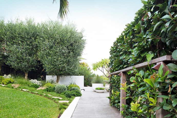 Viburnum odoratissimum screens the garden from the street, ensuring  complete privacy.