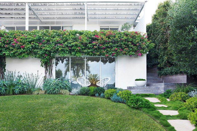 """One side of the garden is shady, the other is in full sun. """"It was a challenge to create symmetry of plant colour, texture and tone,"""" says Lyndall. Two plants that occur on both sides are Crassula ovata and Senecio serpens. The lawn is Sir Walter buffalo, a hardy evergreen grass."""