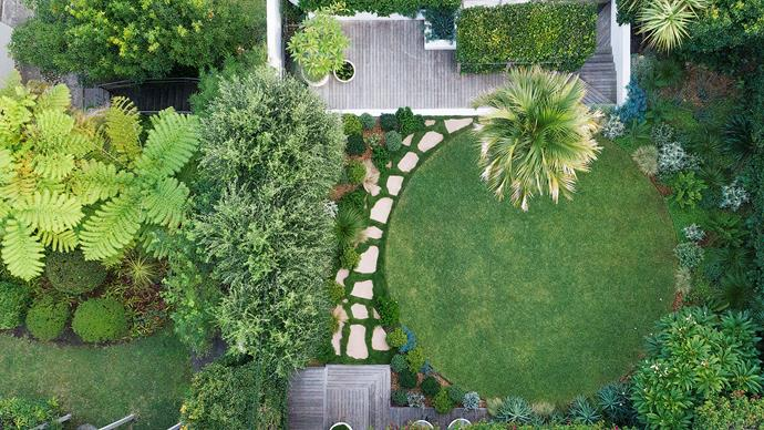 An aerial view of the garden showing the circle of lawn and textural planting. The beautiful crown of a kentia palm (Howea forsteriana) can be seen on the top edge of the circular lawn.