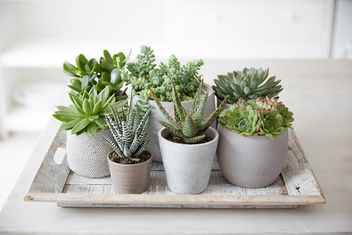This succulent centrepiece is pretty as a picture (no re-potting required). *Photo: Getty*