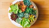 How to make a living table centrepiece from succulents