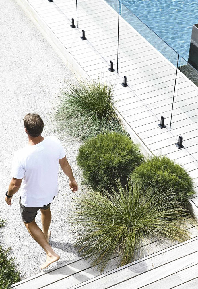 """He started by dressing the fence lines with advanced specimens of coastal banksia, *Banksia integrifolia*, which is [indigenous to much of Australia'](https://www.homestolove.com.au/native-coastal-garden-plants-4685