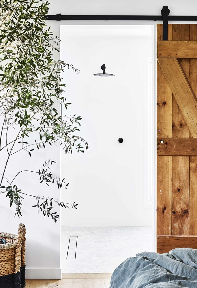 "**Olive tree:** Although this ancient species is typically and outdoor plant, they are becoming a popular choice for [indoor gardeners](https://www.homestolove.com.au/8-indoor-gardening-ideas-13352|target=""_blank""), especially in modern country homes. With its delicate, soft green leaves and thin grey branches, an olive tree will make an elegant statement. As they are accustomed to growing outdoors, make sure you pop them in a sunny spot in your home and take them outside occasionally for a good dose of UV light."