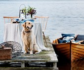 Sneak preview: Country Style magazine's January issue