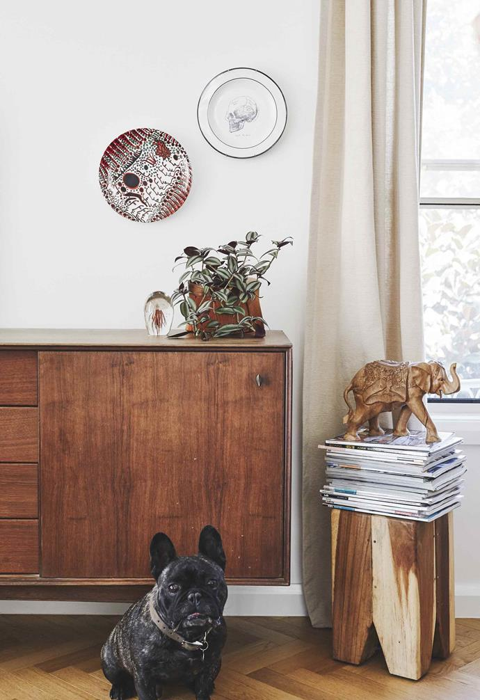 """**Living area** Walter Frog the French bulldog poses with the timber sideboard, found in an op-shop. HK Living wood stool and Glass Sculpture, [Kira & Kira](http://www.kiraandkira.com.au/
