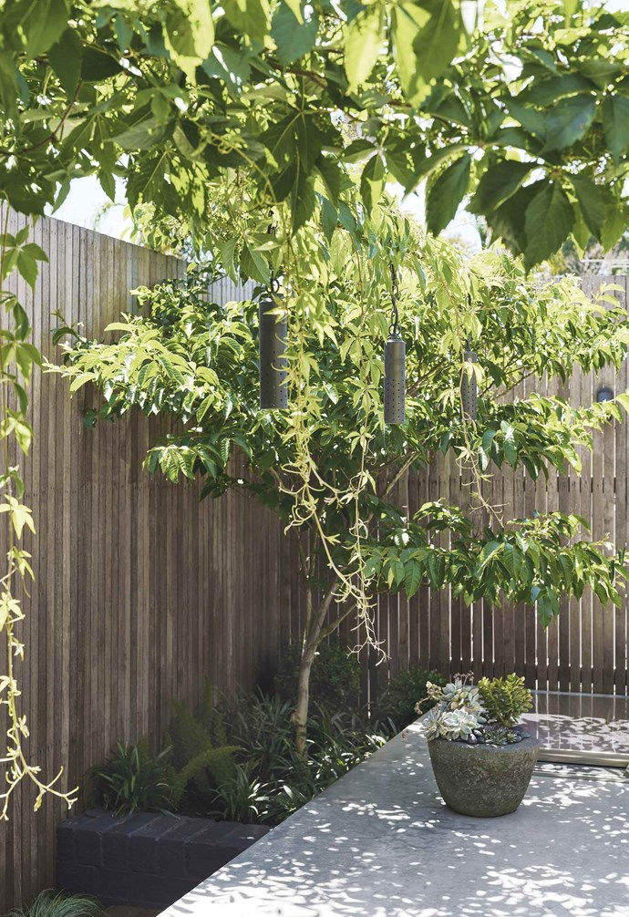 """Merbau battens finished with Feast Watson Water Repellent Timber & Deck Oil screen the garden and deliver a quiet backdrop to the greenery. """"It's an easy garden to maintain,"""" says Peter."""