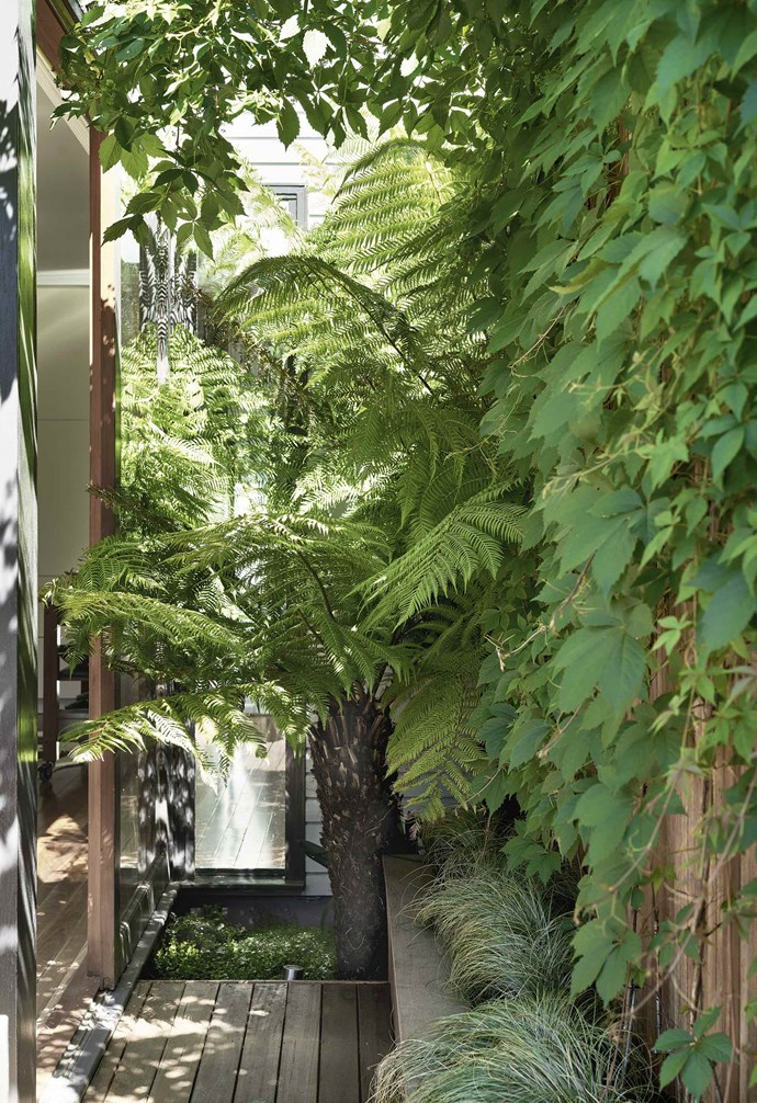 """The delicate fronds of tree fern (*Dicksonia antarctica*), underplanted with frosted curls (*Carex albula*), create a beautifully lush area visible from the kitchen. """"The garden has completely transformed the living spaces inside by extending our line of vision,"""" says Peter."""