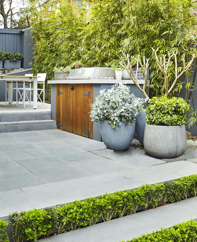 Buxus plantings create striking green strips in the steps leading to the barbecue and dining zone. The potted plants here are Kalanchoe 'Silver Spoons', frangipani and jade plant (Crassula ovata).