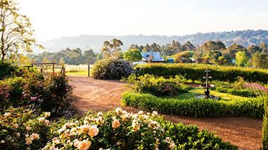 Rose garden at Sunnyhurst Winery, Bridgetown, WA