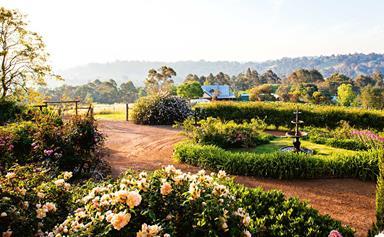 Rose garden at Sunnyhurst Winery, Bridgetown, WA