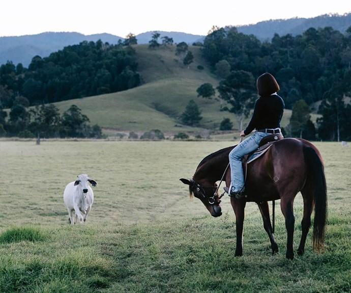 Horse on Australian farm