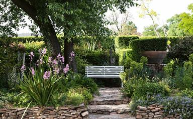 Stanthorpe garden abloom with wisteria and rambling roses