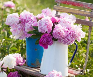 Bunches of pink peonies in vintage enamel jugs