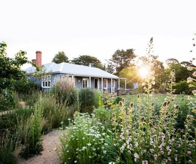 A wild Victorian garden