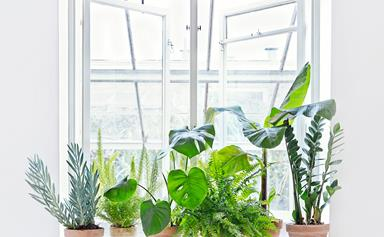 Top 15 indoor plants