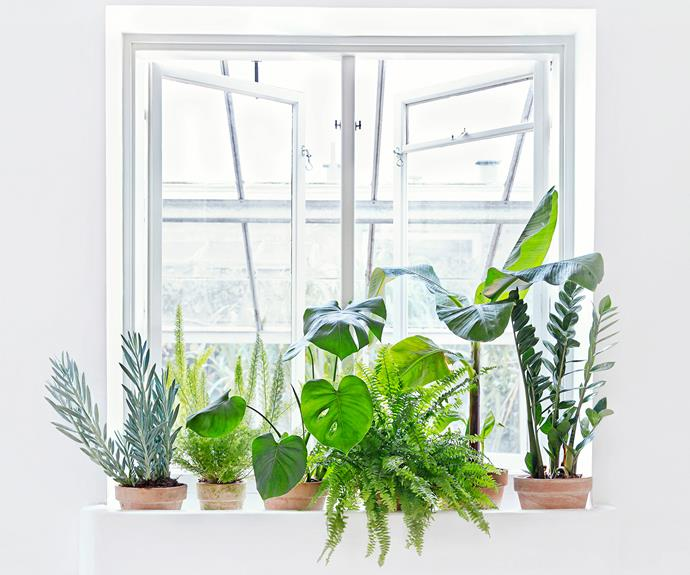 Indoor plants on windowsill