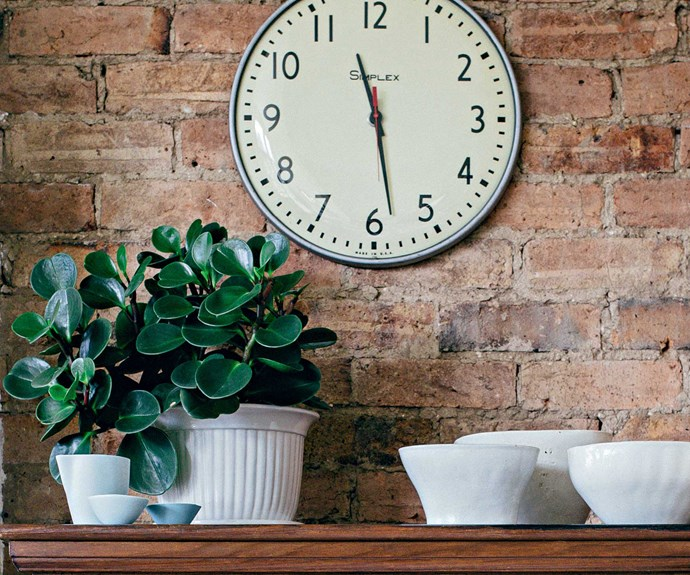 Rubber plant (Ficus elastica) needs bright indoor light. Allow potting mix to dry out between watering. Keep the large leaves dust free, repot this vigorous plant as needed and prune to keep compact. | Photo: Felix Forest