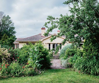 A farmhouse garden ablaze with flowering poppies