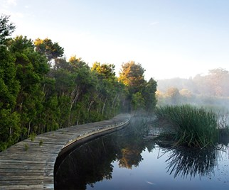 Timber walkway above a still lake surrounded by gardens and rising mist