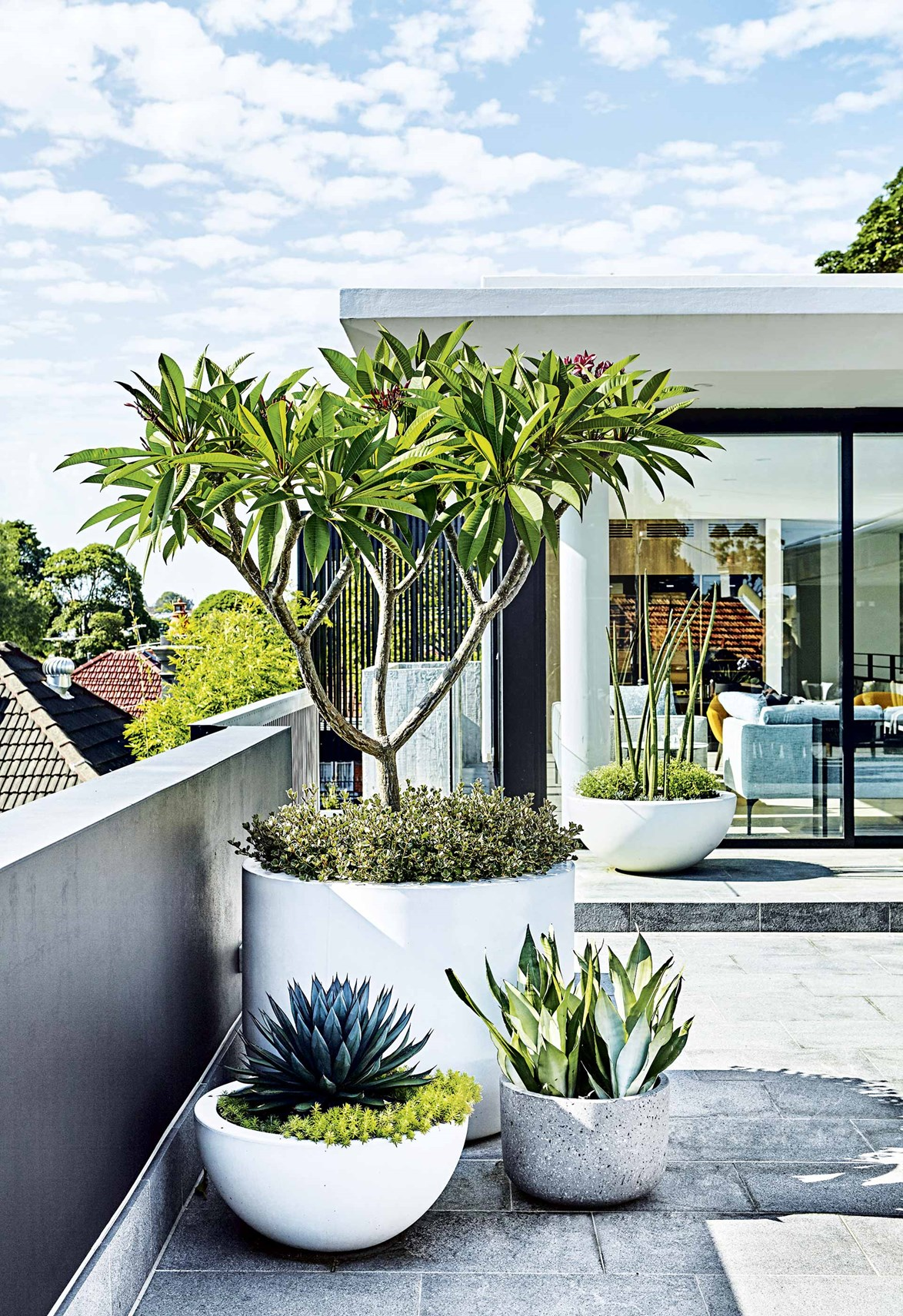 "Adam chose a palette of [tough plants for this rooftop garden](https://www.homestolove.com.au/the-best-plant-choices-for-a-rooftop-garden-18178|target=""_blank"") with a range of forms and textures, from the stiff swords of mother-in-law's tongues to a lush and leafy [frangipani](https://www.homestolove.com.au/how-to-grow-frangipani-8981