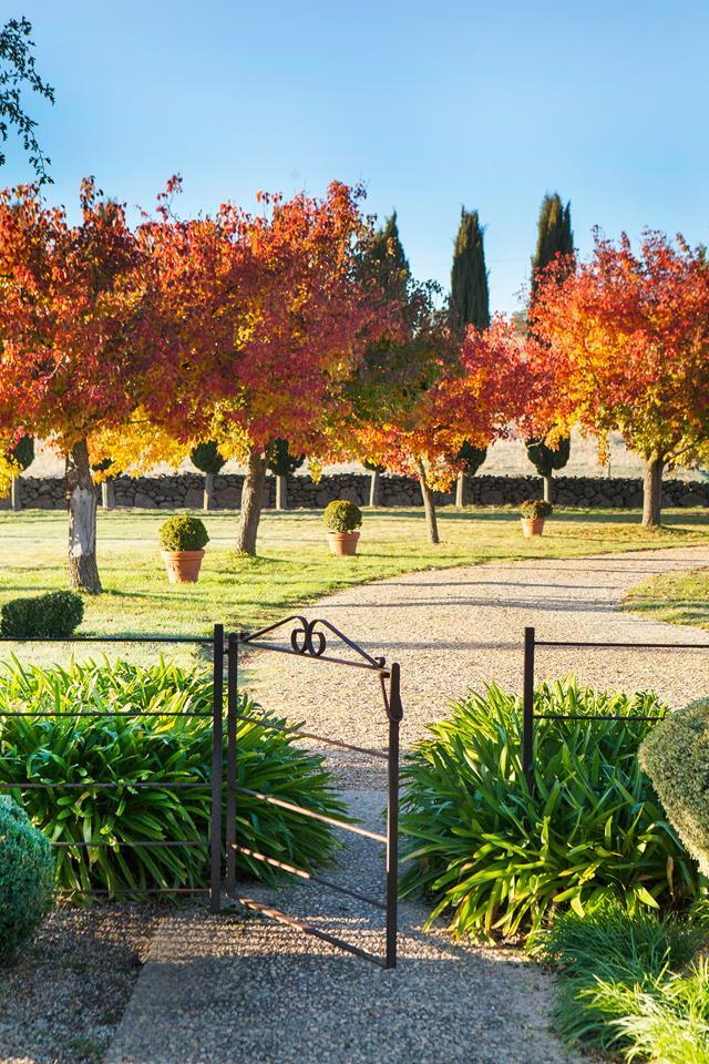 """Owners Michelle and Cliff credit the restrained layout and planting palette of this garden to the previous owners, Helen and Peter Cole. The gravel driveway is lined with ornamental pear trees (Pyrus calleryana 'Chanticleer'), seen here in their [autumn finery](https://www.homestolove.com.au/a-country-garden-ablaze-with-fiery-colour-5450