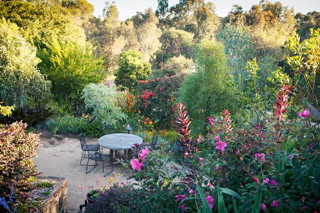 """This garden displays a [diversity of foliage](https://www.homestolove.com.au/native-exotic-plant-garden-19420