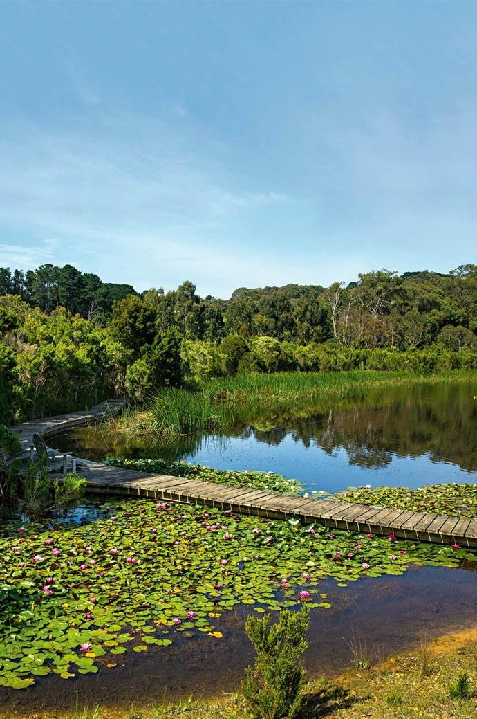 "This garden on the [Mornington Peninsula](https://www.homestolove.com.au/garden-with-private-lake-mornington-peninsula-13836|target=""_blank"") features mass plantings of water lilies. *Photo: Claire Takacs*"