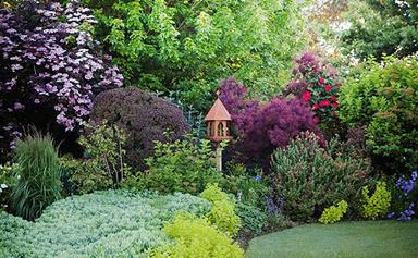Colourful and lively Australian gardens