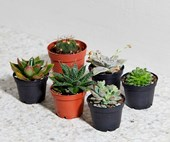 How to propagate succulents and tropical house plants from cuttings