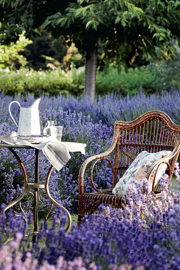 "**VISIT LAVANDULA SWISS ITALIAN FARM**<p> <p>Could there be a more perfect place to dream? Here at Carol White's [Lavandula Swiss Italian Farm](https://www.lavandula.com.au/|target=""_blank""