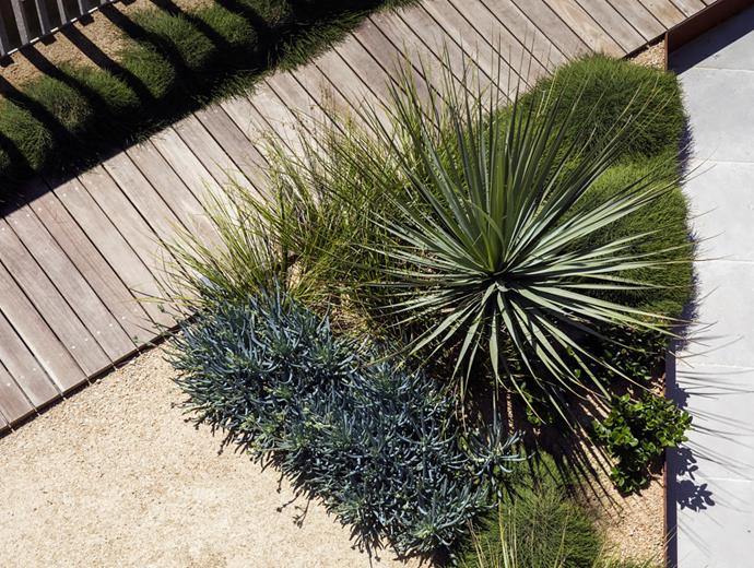 The strong lines of this coastal garden are softened by loose, textural planting.
