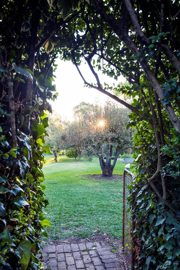 A mature pear tree is central to this bountiful orchard, which also produces citrus, raspberries, figs and quinces.