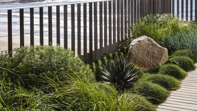 A coastal garden in Sydney
