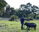 Family-run organic farm in Margaret River