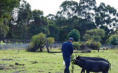 Family-run organic farm in Margaret River