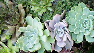 9 types of succulents you've probably never heard of