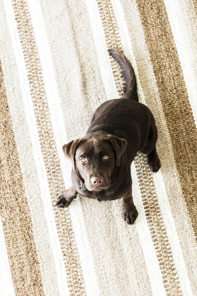 "[Poncho, the fun-loving chocolate Labrador](https://www.homestolove.com.au/chocolate-labrador-19743|target=""_blank""), loves hanging out on the beaches of Byron Bay and making friends with locals."