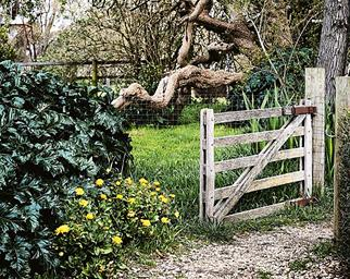 Wooden gate on country property