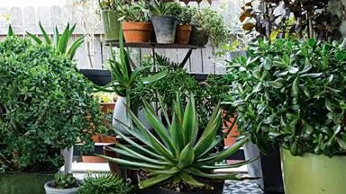 7 easy-to-grow succulents for your garden