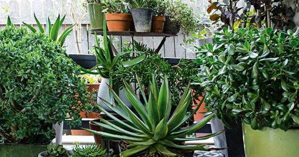 7 Easy To Grow Succulents For Your Garden Homes To Love