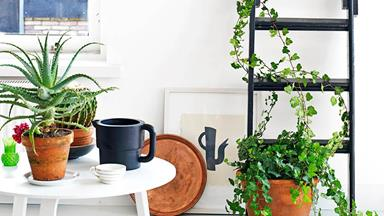 13 creative ways to decorate with indoor plants