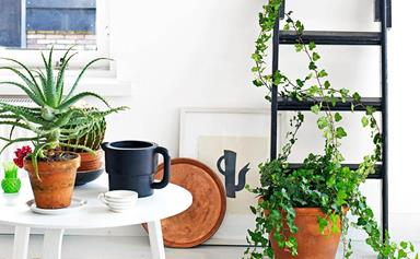 13 creative ways to decorate with indoor plants